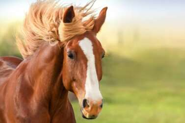 How Much Does a Horse Cost – Average Cost For Owning, Feeding & Boarding